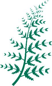 GreenFernONLY-transparent